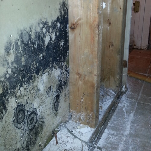 Jt Mold Removal